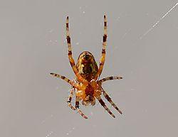 spider_6.JPG