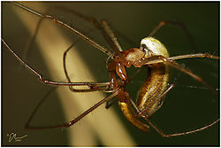 spidereatmate.jpg