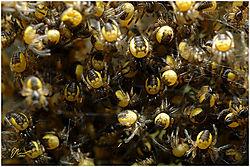 spidernest2.jpg