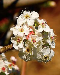 spring-bloom-1-web.jpg
