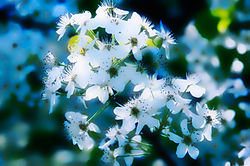 spring-white-flowers.jpg