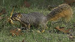 squirrel16.jpg