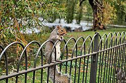 squirrel9.JPG