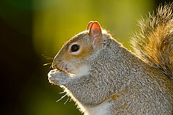 squirrel_gen_2783.jpg
