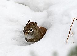 squirrel_nikon_DSC1456.jpg