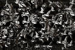 the-birds1.jpg