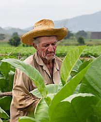 tobacco_farmer_Cuba-6635.jpg