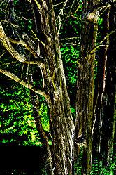 tree-solorized.jpg