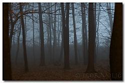 trees_1_.jpg