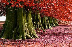 trees_n.jpg