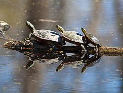 turtles_in_perspective_s.jpg