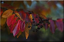 vcm_s_kf_repr-leafs-color.jpg