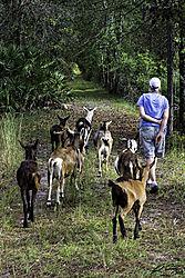 walking_with_the_herd.jpg