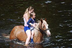 washing_the_horses_16.jpg