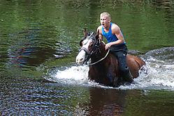 washing_the_horses_6.jpg