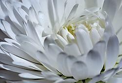 white_good10.jpg