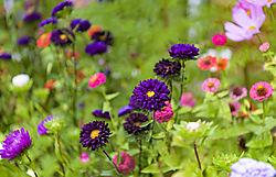 wild_flowers_yukon.jpg