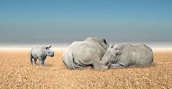 wildlife_park_rhino_composite.jpg