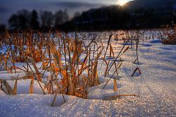 wintergras-9229_30xs.jpg
