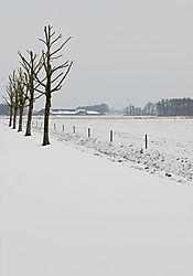 winterse_bomenrij-klein.jpg