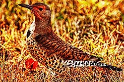 woodpecker15.jpg
