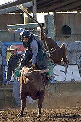 x_TR41172_Cody_McClure_bull_rider_rodeo_.jpg