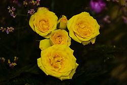yellow6.jpg