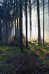 zon_door_sparren-2.jpg