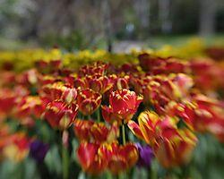 zoo_blooms_zoom.jpg