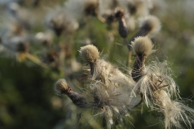 weeds1