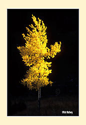 12017Flaming-AspenS2a.jpg