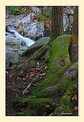 Granville-Forest1.jpg