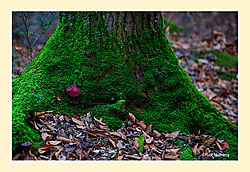 Granville-Forest2.jpg