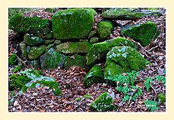 Granville-Forest3.jpg