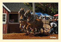 Horse-Pull1.jpg