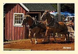 Horse-Pull2.jpg