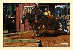 Horse-Pull3.jpg