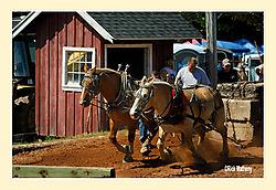 Horse-Pull4.jpg