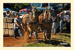 Horse-Pull5.jpg