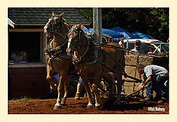 Horse-Pull6.jpg