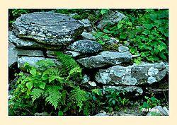 Kent-Falls-Ferns.jpg
