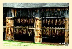 Tobacco-Barn2.jpg