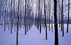 12105tree_line_in_snow_copy.jpg
