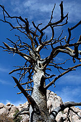 87970burntree_nature.jpg