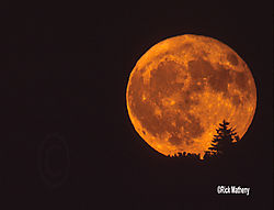 12017Full-Moon-and-a-TreeS21.jpg