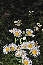 April_weeds.jpg
