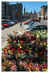 36461Ott-Flowers-Vert_FrSigWEB.jpg