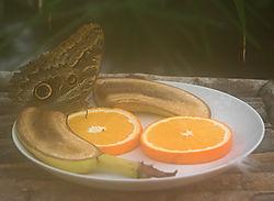 80322DSC_0048-01_butterfly.jpg