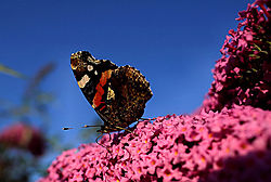73516schmetterling.JPG