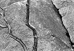 75830b_w-branch-boulder-617.jpg